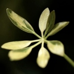 img_0814_8jari-565x376_www.made widhana.com