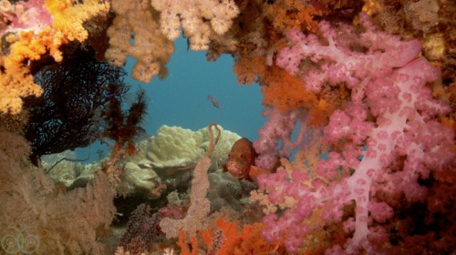 Misool Eco Resort_W Papua_Reef Shawn Heinrichs_www.misoolecoresort.com