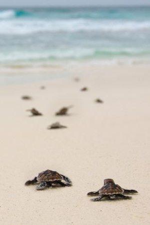 North Island_Seychelles_01