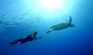 Derawan Turtle Sanctuary_Borneo_img_feat_marine1_june2009