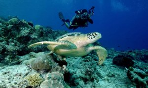 Derawan Turtle Sanctuary_Borneo_photo_Cipto Aji Gunawanimg_feat_marine2_june2009