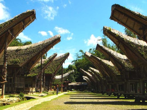 Traditional Torajan archicture. Saddle back roofs are meant to resemble the Water Buffalo, an animal central to Torajan life. Photo: www.archipelago-travel.com