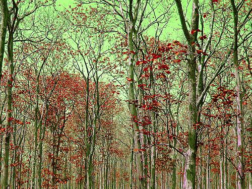 Alas Purwo National Park, in G-Land's vicinity. Photo: www.rian-aditya.com