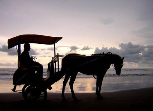 Parangtritis. Have horse-drawn cart, will sight see. Photo: www.fayday.files.wordpress.com