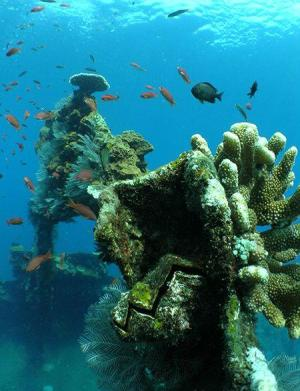 Scuba Diving-BALI-Tulamben 2