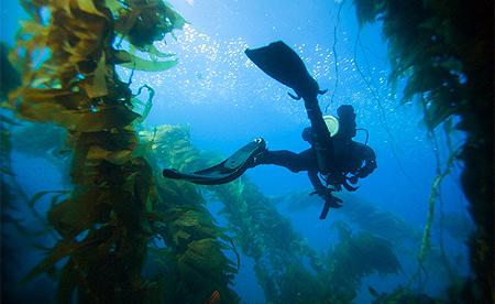Fundu Lagoon-TANZANIA-Diving School 2